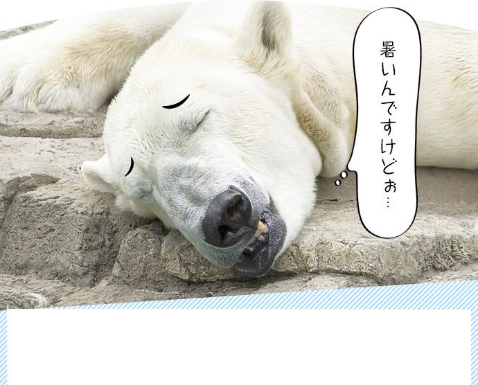 地球温暖化防止啓発 動画コンテスト イメージ