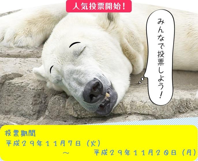 動画コンテスト投票お知らせ